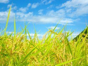 【受付終了】H29年度 高付加価値食品開発支援事業の2次募集を開始します!